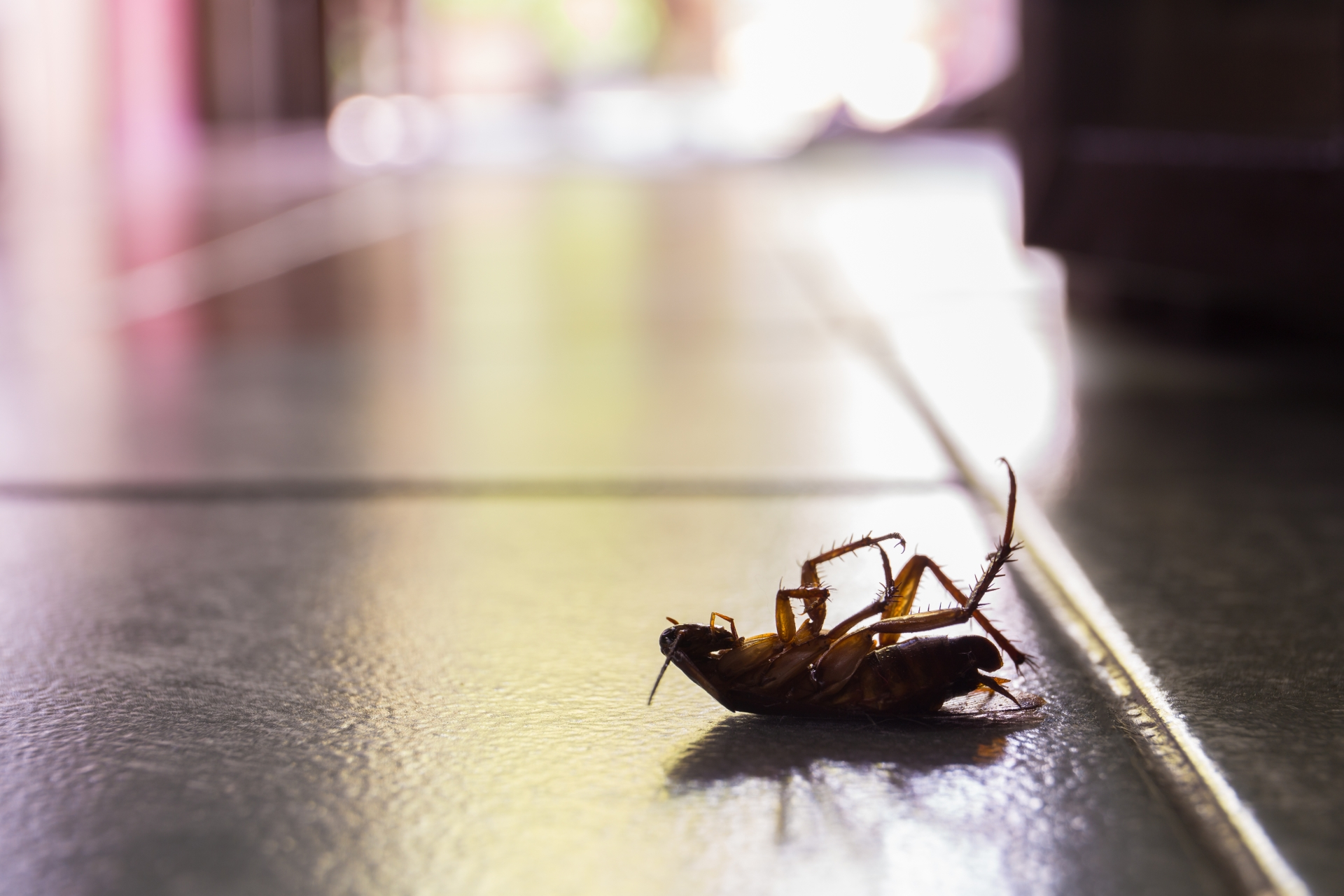 Cockroach Control, Pest Control in Bexley, DA5. Call Now 020 8166 9746