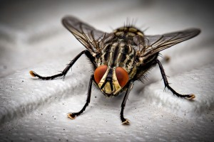 Insect Control, Pest Control in Bexley, DA5. Call Now 020 8166 9746